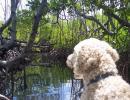 Σκύλος Στη Ζούγκλα
